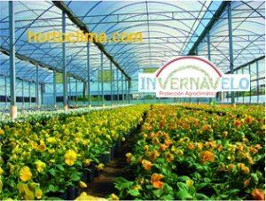 Con un invernadero tendrá muchos más cuidados con sus cultivos y esto le beneficiará ya que se producirán frutos de mayor calidad