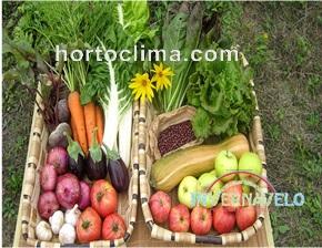Los productos que se generen de un cultivo en invernadero con un hortoclima serán de la mejor calidad.
